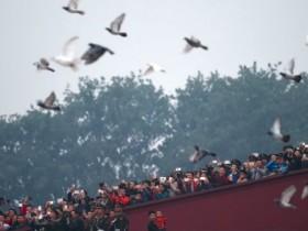 70周年国庆大会的和平鸽哪来的?